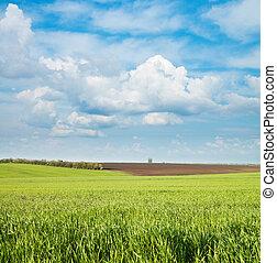 zöld, és, fekete, mező, alatt, cloudy ég