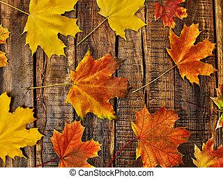zöld, ősz, asztal, háttér, fából való