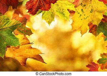 zöld, ősz, bokeh, koholás, háttér, kedves
