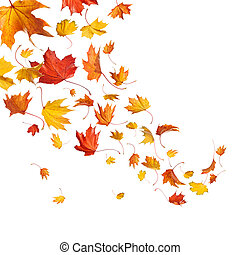 zöld, ősz, esés