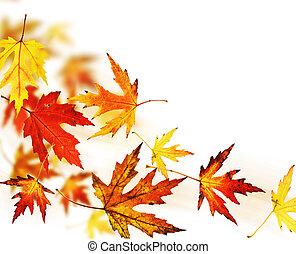 zöld, ősz, felett, fehér