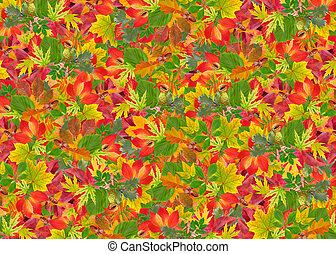 zöld, ősz, háttér, színes