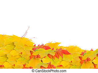 zöld, ősz, határ