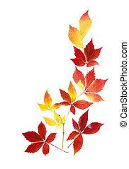 zöld, ősz, rendes, egyezség