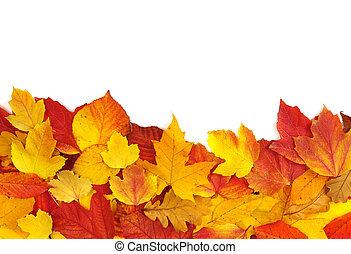 zöld, ősz