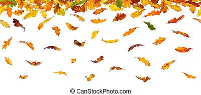 zöld, ősz, tölgy