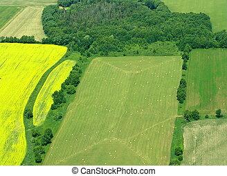 zöld, acres