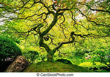 zöld, bámulatos, fa