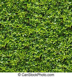 zöld, bush., seamless, tileable, texture.