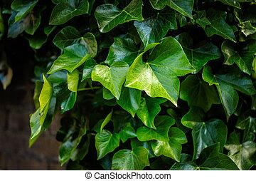 zöld, bushes., liget