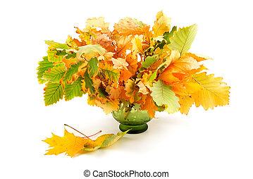 zöld, elszigetelt, ősz, háttér, fehér, zenemű