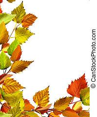 zöld, elszigetelt, ősz, háttér, nyírfa, fehér