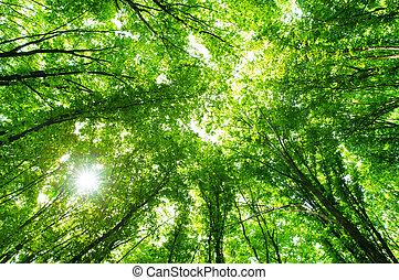 zöld erdő, háttér