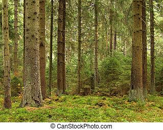 zöld erdő