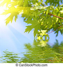 zöld, eredet, zöld, ellen, kék ég
