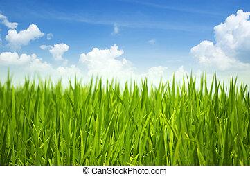 zöld fű, és, ég