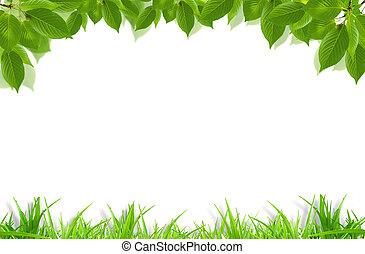 zöld fű, és, friss, zöld, keret