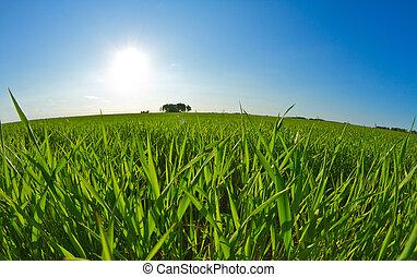 zöld fű, blue, ég