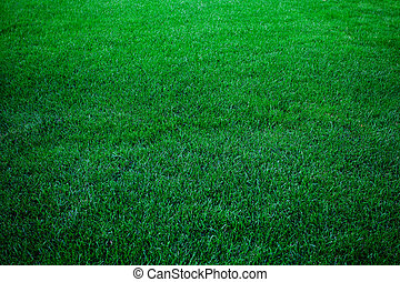 zöld fű, buja, háttér