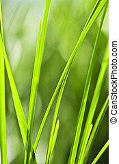 zöld fű, háttér