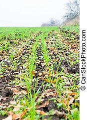 zöld fű, képben látható, mező