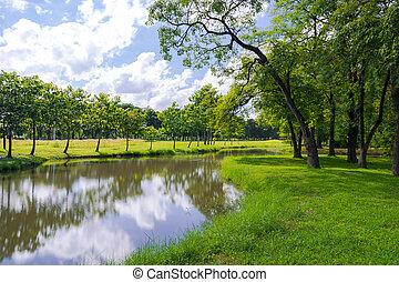 zöld fa, alatt, egy, gyönyörű, liget, alatt, kék ég, noha, visszaverődés, alatt, víz