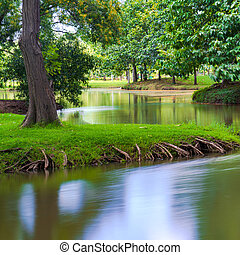 zöld fa, alatt, egy, gyönyörű, liget, noha, visszaverődés, alatt, víz