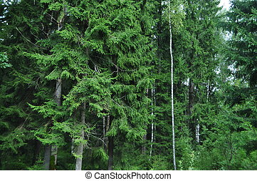 zöld fa, alatt, erdő