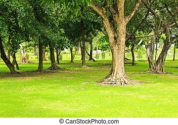 zöld fa, dísztér