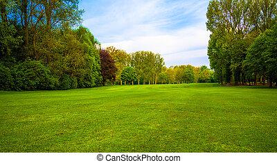 zöld, field., gyönyörű, parkosít., fű, és, erdő