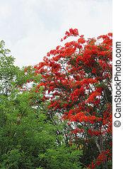 zöld, flowers., fa, piros