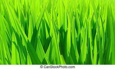 zöld, friss, háttér, zöld