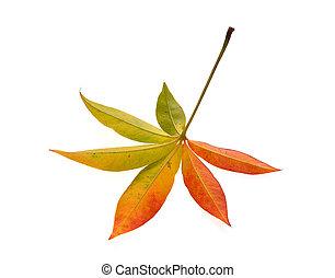 zöld, hát, elszigetelt, ősz, háttér, fehér