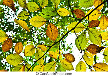 zöld, háttér, ősz, csoport, narancs