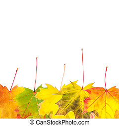 zöld, háttér, ősz