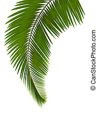 zöld, háttér, pálma, fehér