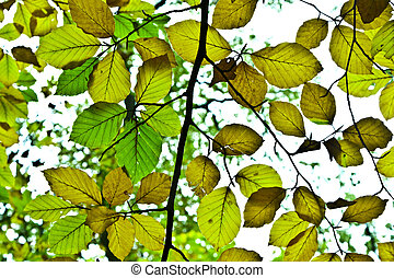 zöld, indiai, háttér, ősz, csoport, nyár