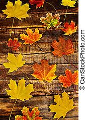 zöld, juharfa, ősz, függőleges, háttér, deszkák, fából való