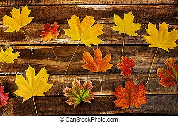 zöld, juharfa, ősz, külön, messze, háttér