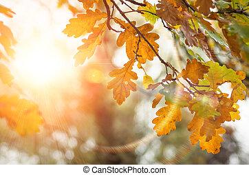 zöld, közül, a, tölgyfa, alatt, természet, bukás