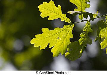zöld, közül, a, tölgyfa, alatt, természet