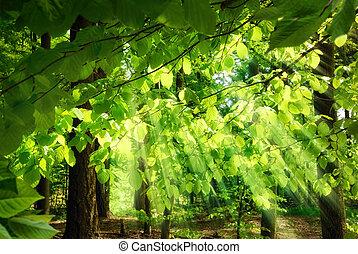 zöld, küllők, át, esés, napvilág