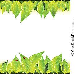 zöld, keret, háttér