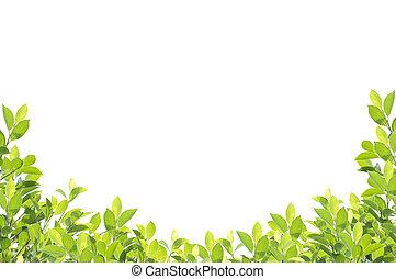 zöld lap, határ, elszigetelt, white, háttér., nyiradék út, included.