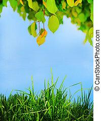 zöld lap, képben látható, egy, fa