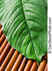 zöld lap