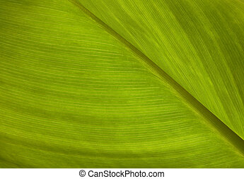 zöld lap, struktúra