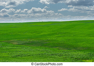 zöld, megfog, közül, most, beültetett, búza