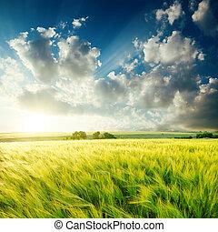 zöld, mezőgazdaság terep, és, napnyugta, felett, azt