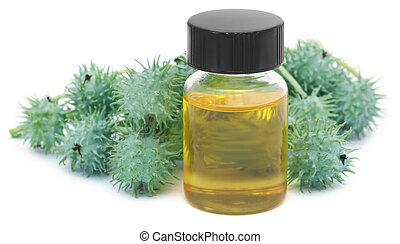 zöld, olaj, bútorgörgő, bab